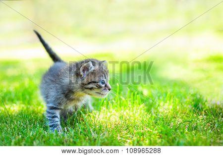 little cat on grass