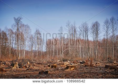 Forest Felling