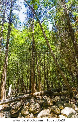 Trees In The Yosemite National Park