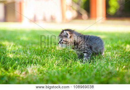 little cat, outdoor