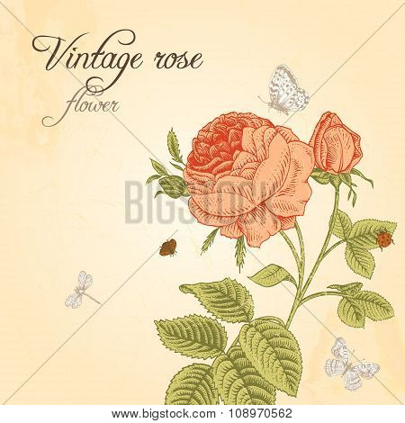 Vector Vintage card with red rose blooming coral insects and white butterflies on a beige background