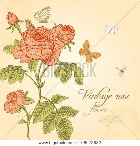 Vector Vintage card with coral red rose blossoming and white butterflies on a beige background.