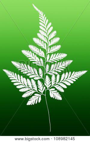 White Fern Leaf Silhouette on Green Background