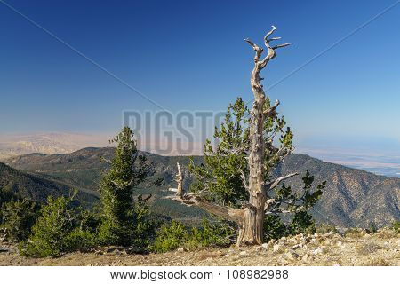 Summit Of Mount Pinos