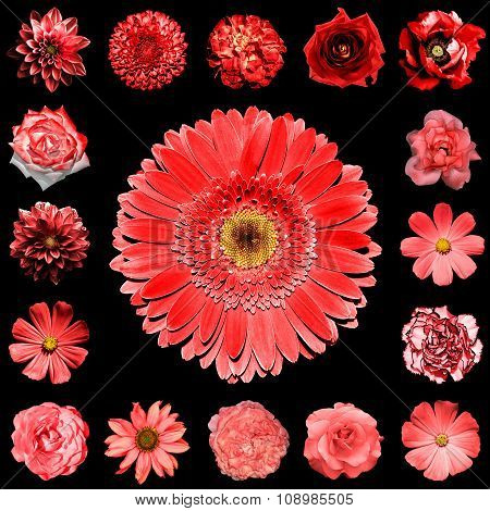 Mix Collage Square Styled Of Natural And Surreal Red Flowers 17 In 1: Dahlia, Primula, Perennial Ast
