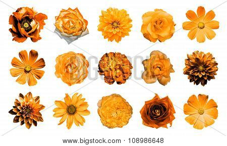 Mix Collage Of Natural And Surreal Orange Flowers 15 In 1: Dahlias, Primulas, Perennial Aster, Daisy