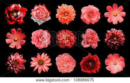 Mix Collage Of Natural And Surreal Red Flowers 15 In 1: Dahlias, Primulas, Perennial Aster, Daisy Fl