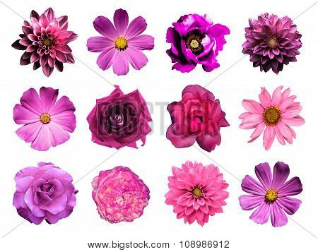 Mix Collage Of Natural And Surreal Pink Flowers 12 In 1: Dahlias, Primulas, Perennial Aster, Daisy F