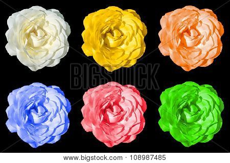 Mix Collage Of Rose Flowers: White, Yellow, Orange, Blue, Red, Green Isolated On Black