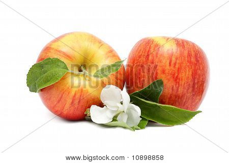Two Red Apples With Green Leaves And Flower
