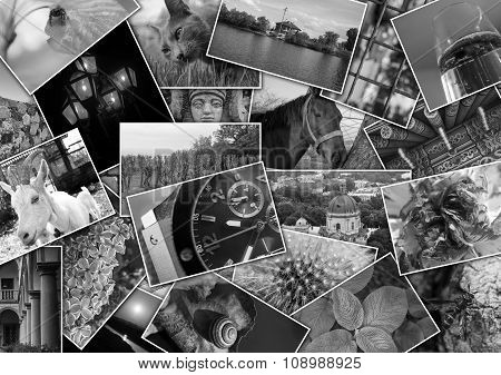 Mosaic Collage With Pictures Of Different Places, Landscapes, Flowers, Insects, Objects And Animals