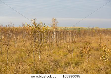 Autumn Yellow Field At The Swamp