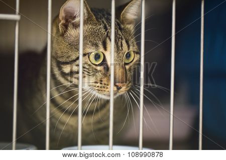 Cat In A Cage At A Vet Clinic