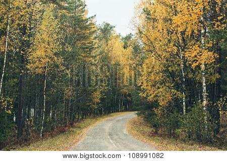 Colorful Autumn Forest With The Road