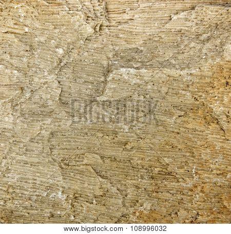 Background of fossilized sea sponge