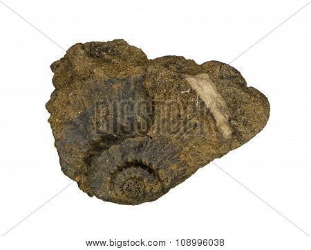 Ammonite fossil imprint in the Jurassic clay