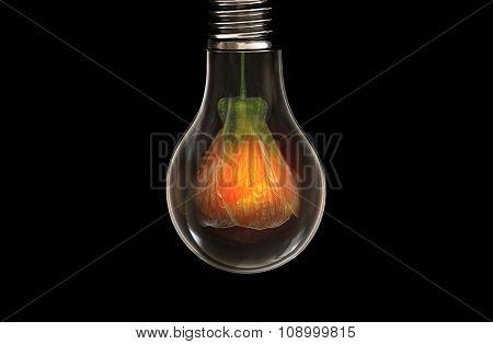 Flower in bulb
