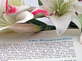 foto of easter lily  - holy bible opened to the resurrection of christ - JPG