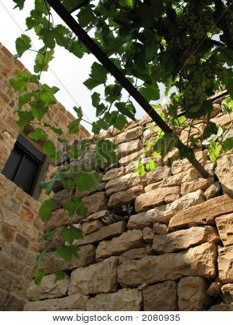 Vine  Wall 2 3Mp