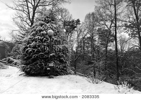 Spring Snow In North Carolina