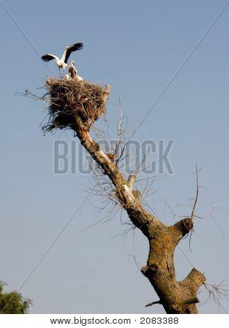 Storks Couple In Nest On Blue Sky Background 4