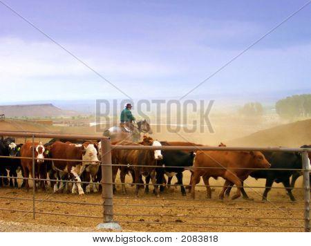 Herding The Cattle_Edited2