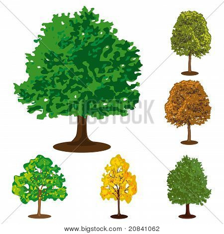 Collection Of Isolated Trees