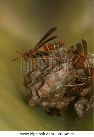 Paper Wasp One Singled Out