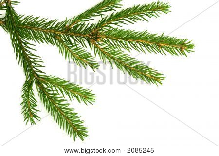 Branch Of A Christmas Tree
