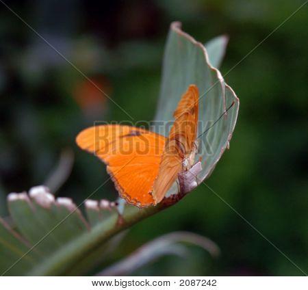 Butterfly Branch