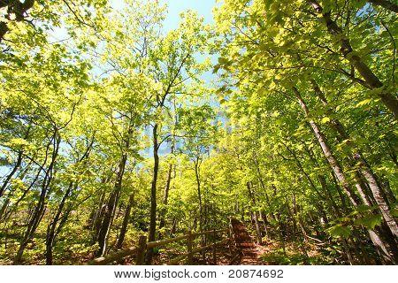 Porcupine Mountains Escarpment Trail