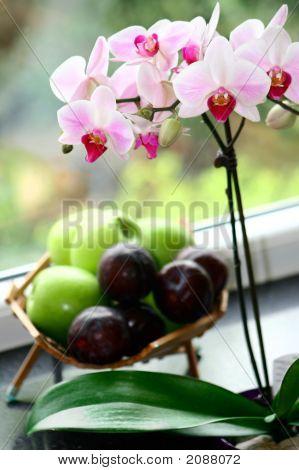 Orchidee, Korb von Äpfeln und Pflaumen von Window ledge