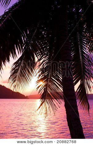 Morning Tree Paradise