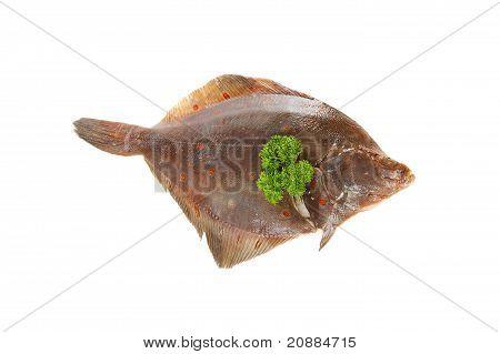Raw Plaice Fish
