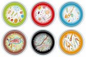 Collection Of Petri Dishes
