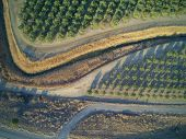 Beautiful Aerial View Of Large Almond Orchard poster