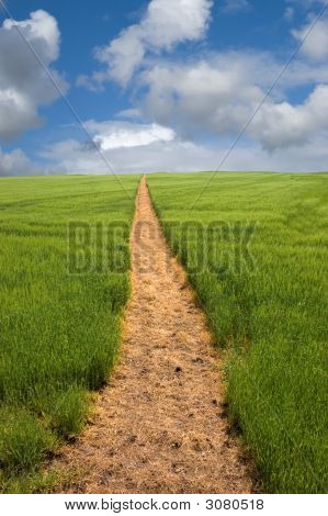 Footpath To The Horizon