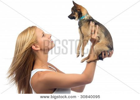 Woman Hold In Hands Small Chihuahua Dog Puppy