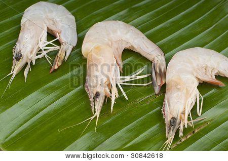 delicious fresh shrimp on a green banana leaf