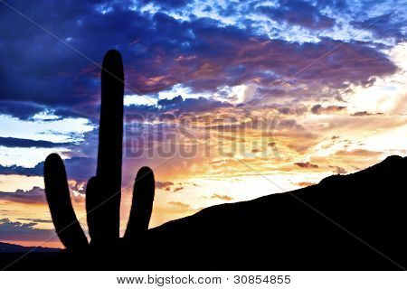 Silhouette Of Cactus In Desert Sunset Lit Sky