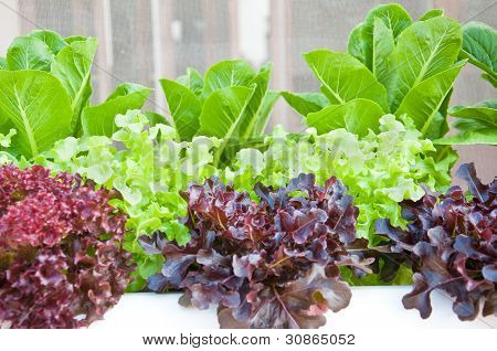 Many Kinds Of Soilless Or Hydroponic
