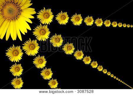 Solar Flower.