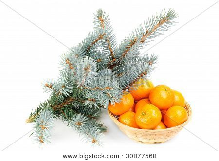 Spruce Branch And Fresh Mandarines Over White Background