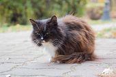 Сute Stray Cat Lies On The Sidewalk. Pets poster