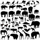 Lots Of Animal Vector Silhouettes poster