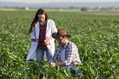 Satisfied Farmer And Woman Agronomist Checking Corn Quality In Field In Early Summer poster