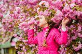 Kid On Pink Flowers Of Sakura Tree Background. Kid Enjoying Pink Cherry Blossom. Tender Bloom. Pink  poster