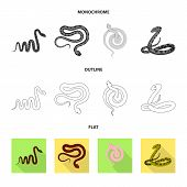 Vector Illustration Of Mammal And Danger Symbol. Set Of Mammal And Medicine Stock Symbol For Web. poster