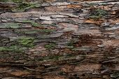 Closeup Texture Of Tree Bark. Pattern Of Natural Tree Bark Background. Rough Surface Of Trunk. Green poster