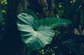 Close Up Of Tropical Plants Nature Background. Nature Background Of Tropical Plants. Tropical Plant  poster